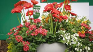 Westhoff-Florist Holland combos