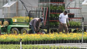 H-2B Gets Cap Increase – Here's How it Impacts Horticulture; Plus Thoughts on H-2A