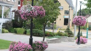 Your Chance To Help America In Bloom As It Celebrates Its 15th Anniversary