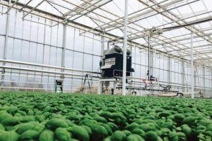 Agam Machine at Grower's Transplanting