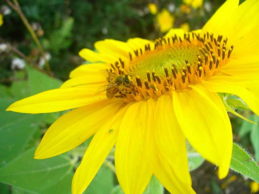 bee vectoring technologies names new president and ceo bee vectoring technologies stock bee vectoring technologies stock symbol