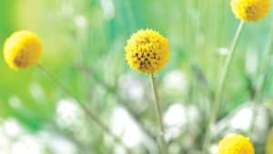 Learn How Unconventional Plants Can Be Hidden Gems
