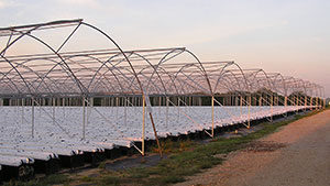Stay Up To Date On Greenhouse Structures And Materials