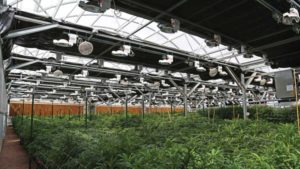 New Light Deprivation Greenhouses Help With Light Management