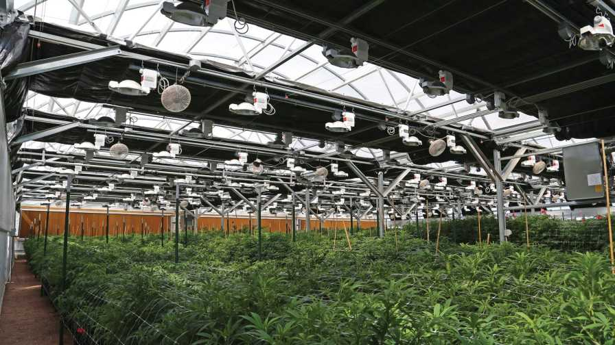 New Light Deprivation Greenhouses Help With Light