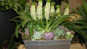 Eucomis arrangement from Golden State Bulb