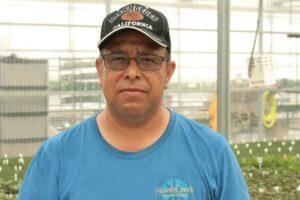 North Creek Head Propagator Francisco Castillo Ramirez
