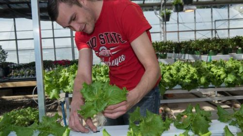 Ohio State University Offering New Greenhouse Engineering Technology Program