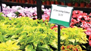 Why Don't We Know More About Pricing Plants?