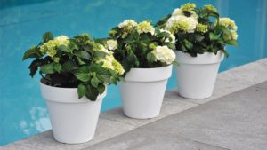 Rio Patio Planters from Pride Gardens