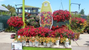 Summerwinds Proven Winners display FEATURE