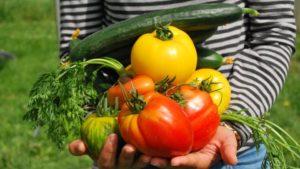 Gardening Is Enjoying A Sharp Increase, National Garden Survey Shows
