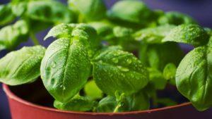 Kitchen Counter Gardening Leads Garden Media Group's Annual Trends List