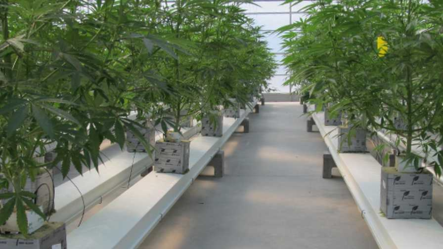 How Cannabis Production Is Becoming More High Tech