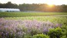 Cavicchio Greenhouses