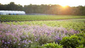 Cavicchio Greenhouses Wins Inaugural Sustainability Award