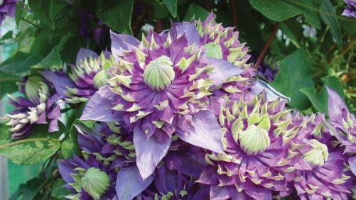 Plantarium 2016 Honors Winning Novelty Varieties