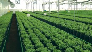 cuttings-facility