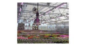 greenpower-led-flowering-lamp-philips-lighting