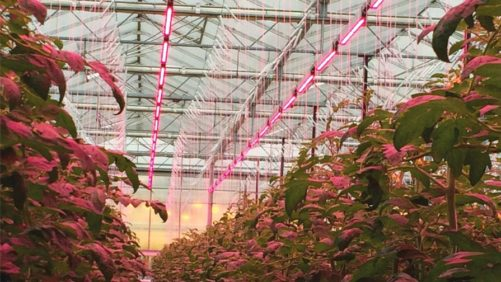 New Research Aims to Cut Greenhouse Energy Costs in Half