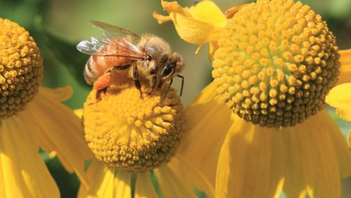 Searching for Pollinator Attractive Plants? A New Resource is Now Available