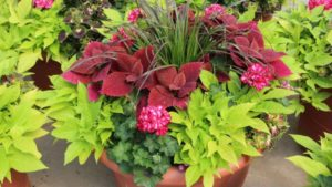 Stockslagers Greenhouse and Garden Center container garden FEATURE