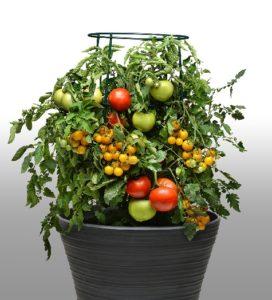 take-2-lights-tomato-combo-cropped