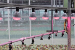 totalgrow-night-and-day-management-boom-lighting-venntis