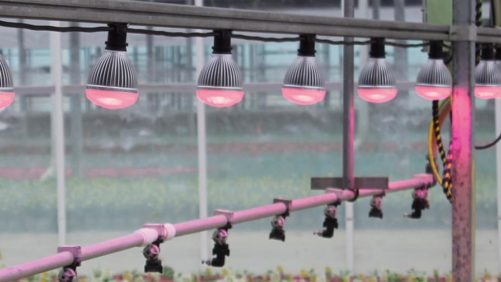 Check Out The Latest In Lighting Technology For Greenhouses