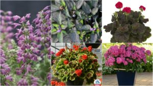 11 Award Winning Annuals You'll Want On Your Benches Next Spring