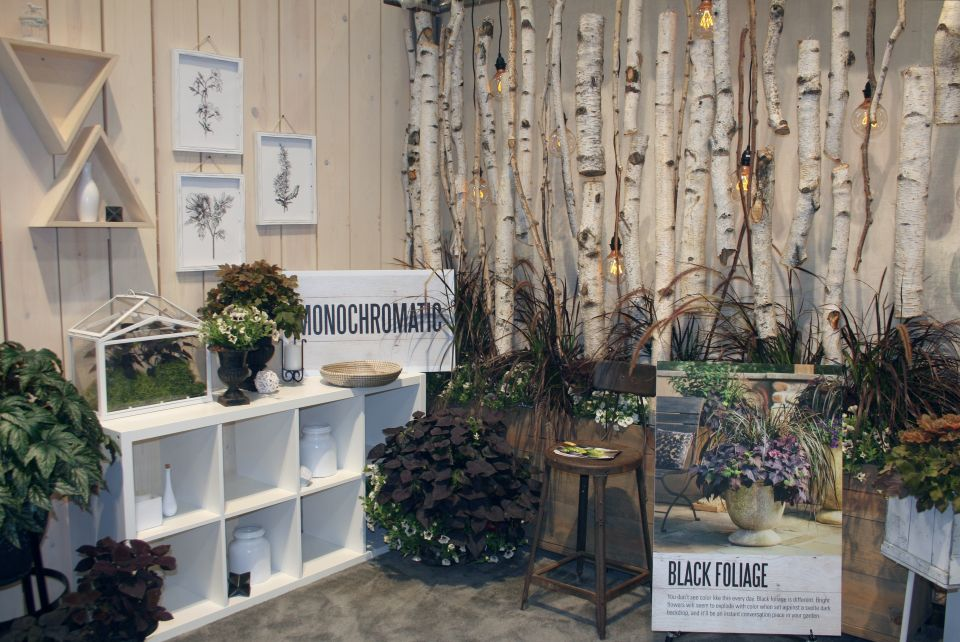 birch-display-at-the-proven-winners-booth-at-cultivate