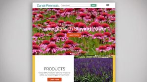 darwin-perennials-website