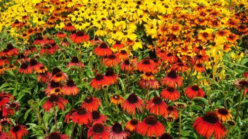 16 New Perennials For Pollinator Gardens