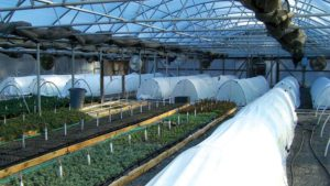 Perennial Propagators' Successes And Challenges:  Results Of A National Survey