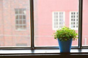 indoor-plant-in-a-window