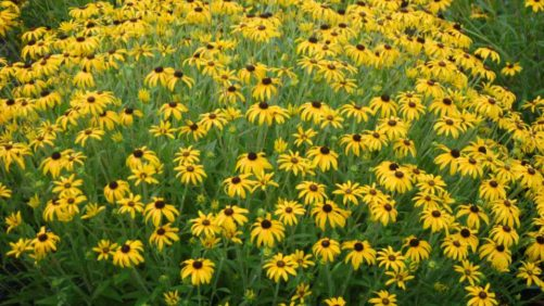 20 New Cold-Hardy Perennials For A Rock Solid Line-Up In 2017