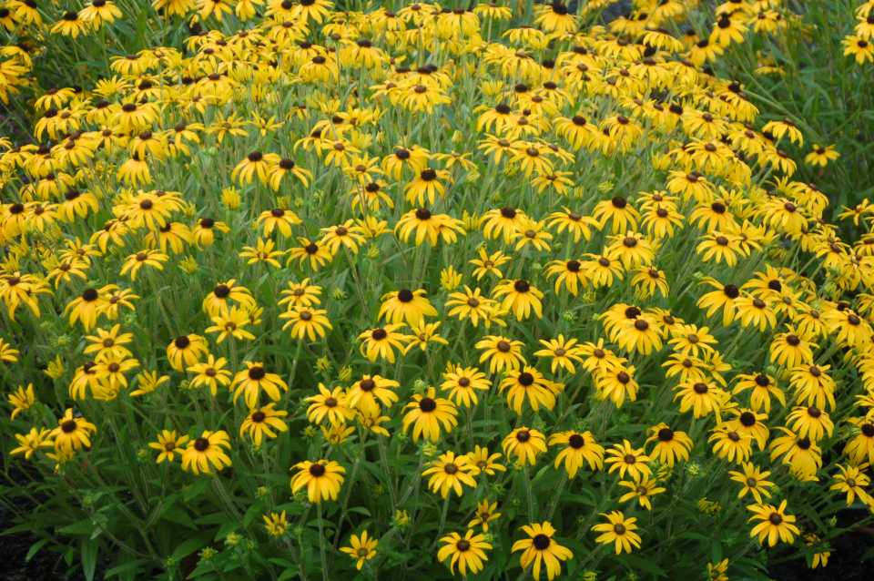 20 New Cold Hardy Perennials For A Rock Solid Line Up In 2017