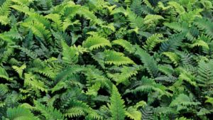 Allan Armitage: Plants I Am Finally Seeing More Of (About Time!)