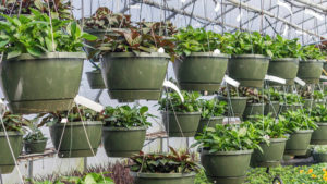 Research Sheds Light on How to Manage Plant Stress With High-Tech Imagery