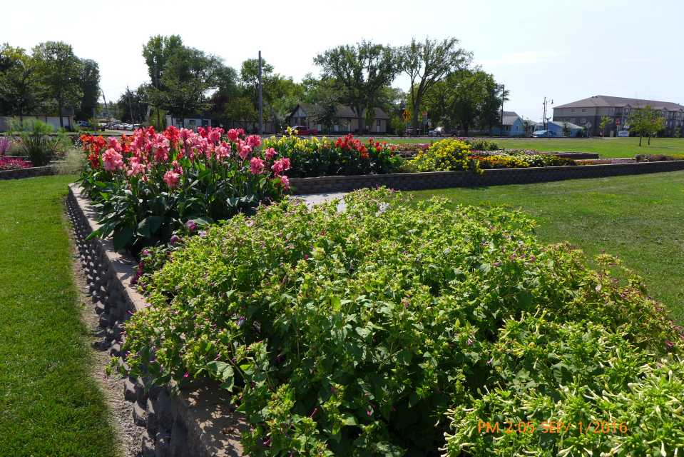 Annuals beds at the North Dakota State University field trials in Fargo, ND.