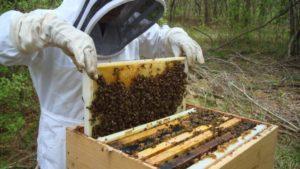 Heroes To Hives Seeks Veterans For Beekeeping Training
