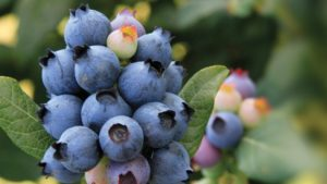BrazelBerries Brand Gets A New Name: Bushel And Berry
