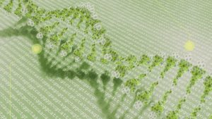 Several Plant-Research Breakthroughs Made