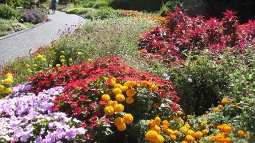 2016 Missouri Botanical Garden Field Trials Results