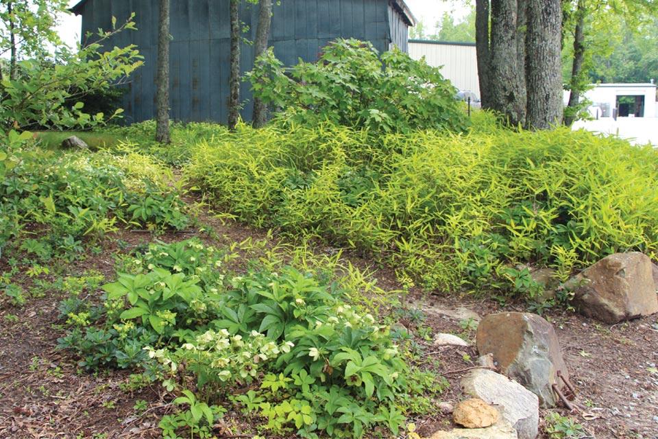 hoffman-nursery-demo-gardens
