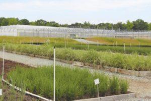 hoffman-nursery-greenhouse-expansion