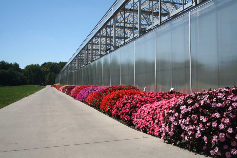 2016 Field Trials at Lucas Greenhouses