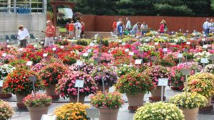 2016 Lucas Greenhouses Field Trials Results