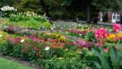 2016 Massachusetts Horticultural Society Field Trials