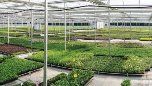 How Greenhouse Technology At North Creek Nurseries Expedites Lean Flow Production